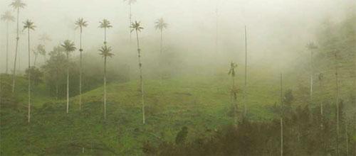 welche ist die schönste kanareninsel